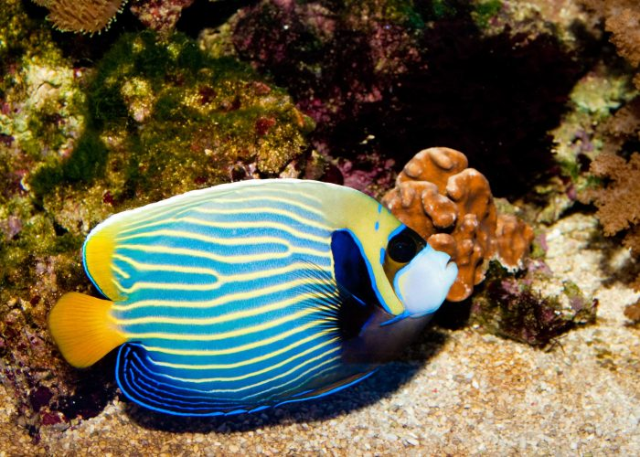 AngelFish1
